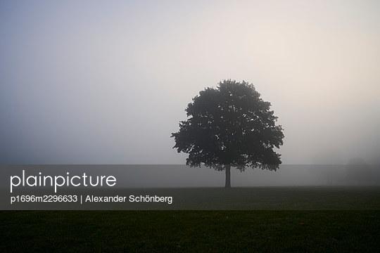 Single tree in the meadow in the fog, City Park, Hamburg - p1696m2296633 by Alexander Schönberg