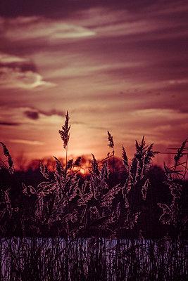 Sonnenuntergang mit Schilf - p1199m1538843 von Claudia Jestremski