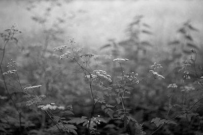 Meadow with wild flowers - p308m2124865 by Ellen Bornkessel