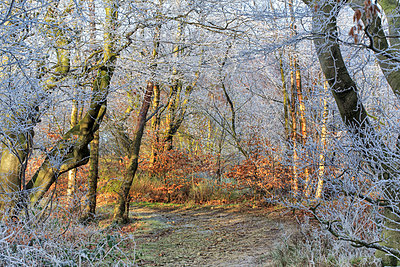 England, West Yorkshire, Calderdale. Sunlight on frosted trees. - p651m2152395 by Robert Birkby