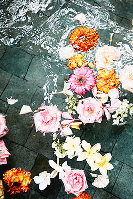 Blumen im Wasser - p887m1124761 von Christian Kuhn