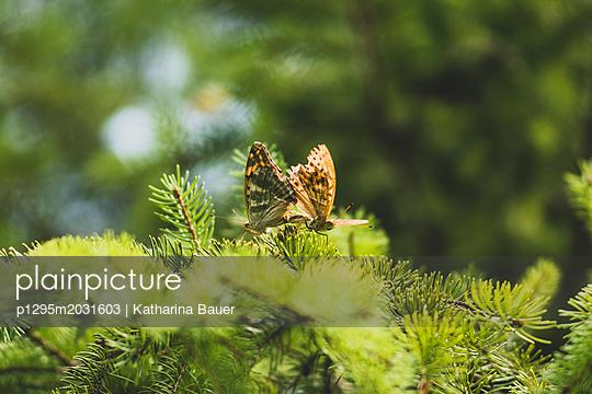 Schmetterlinge bei der Paarung - p1295m2031603 von Katharina Bauer