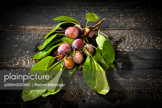 Twig with unripe plums on dark wood - p300m2023651 von Roman Märzinger