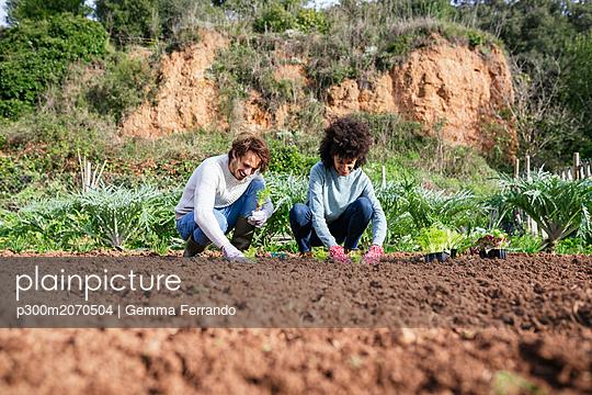 Couple planting lettuce seedlings in vegetable garden - p300m2070504 by Gemma Ferrando
