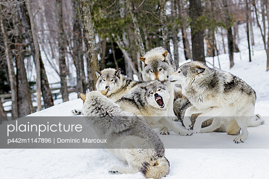 p442m1147896 von Dominic Marcoux