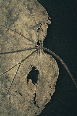 Leaf - p971m1190907 by Reilika Landen