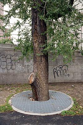 Einzelner Baum in New York - p265m2082699 von Oote Boe