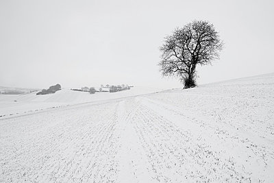 Germany, Rhineland-Palatinate, Neuwied, snow covered winter landscape with single tree - p300m873483f by Andreas Pacek