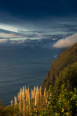 Madeira - p1032m903704 by Fuercho