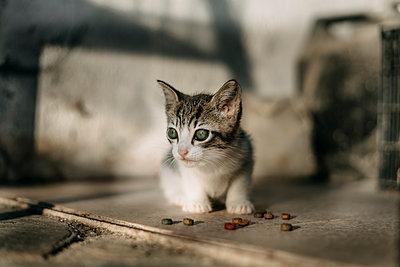 Kitten with green eyes - p300m2012238 von Aitor Carrera Porté