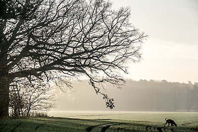 Bare trees in autumn - p739m1191014 by Baertels