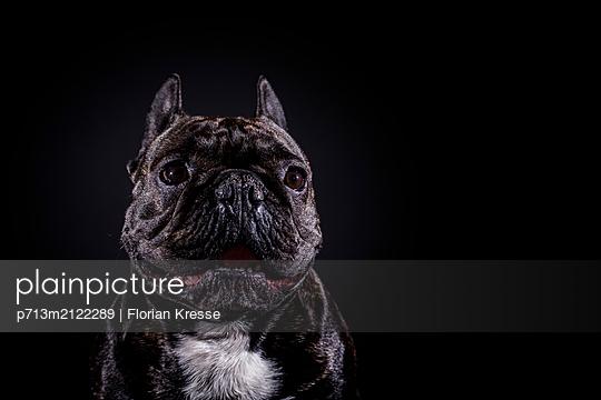 p713m2122289 by Florian Kresse