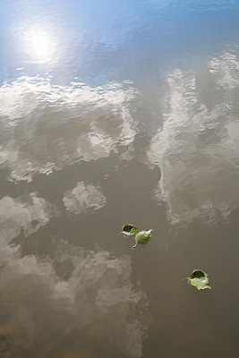 Green leaves floating on cloudy water - p1682m2270267 by Régine Heintz