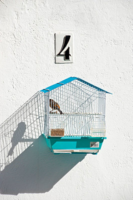 Birdcage - p973m777485 by Jennifer Rumbach