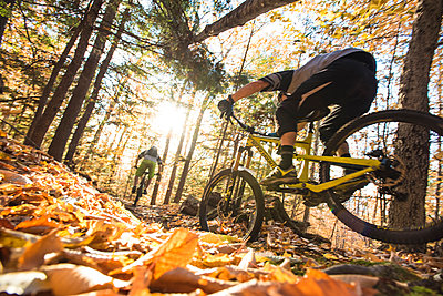 Autumn mountain biking in the WHite Mountains of New Hampshire. - p343m1168193 by Joe Klementovich