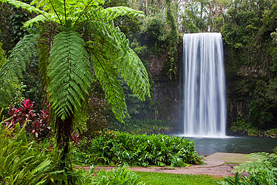 Australia, Queensland, Millaa Millaa. Millaa Millaa Falls on the Atherton Tablelands near Cairns. - p652m716701 by Andrew Watson