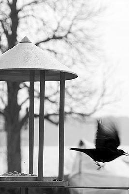 Vogel am Futterhaus - p739m1094345 von Baertels