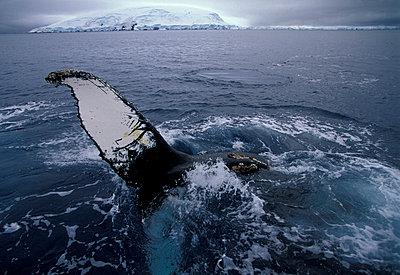 Antarctic Peninsula - p1014m766140 by Roberto Rinaldi