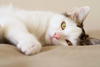 Katzenportrait - p1097m1503901 von Mélanie Bahuon