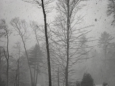 Winter storm in woods with heavy blizzard snowfall - p1166m2073599 by Cavan Images