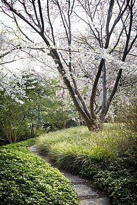 Blossoming tree - p464m904372 by Elektrons 08