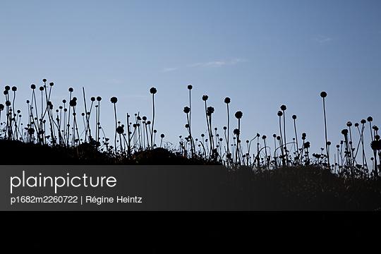 Pflanzen im Gegenlicht - p1682m2260722 von Régine Heintz