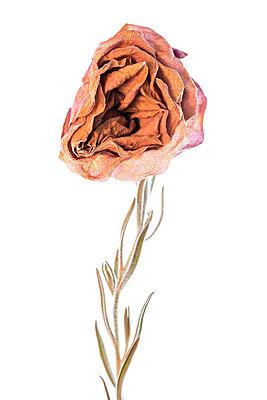 Flowers - p1594m2160847 by Françoise Chadelas