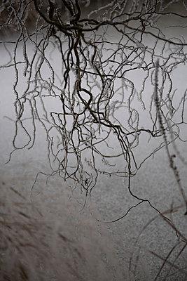 Icy twigs - p1682m2263429 by Régine Heintz