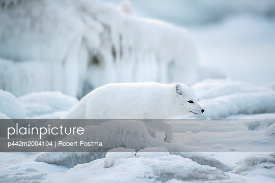 p442m2004104 von Robert Postma