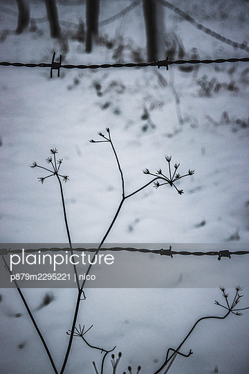Barbed wire fence in winter - p879m2295221 by nico