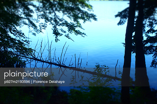 Fallen tree - p927m2193596 by Florence Delahaye