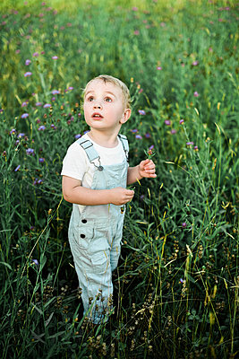 Two year old boy in baby blue coveralls picking flowers in a meadow. - p1166m2171512 by Cavan Images