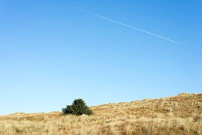 Kondensstreifen am blauen Himmel - p1201m1538493 von Paul Abbitt