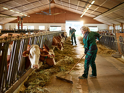 Female farmer working in cow house on a farm - p300m2166534 by Christian Vorhofer