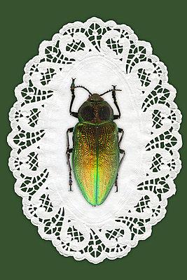 Käfer auf einem Spitzendeckchen - p4150642 von Tanja Luther
