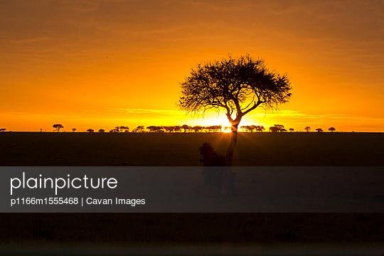 p1166m1555468 von Cavan Images