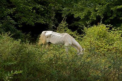 Verhungertes Pferd - p2651298 von Oote Boe