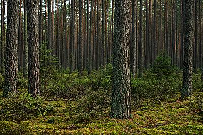 Wald - p947m945790 von Cristopher Civitillo