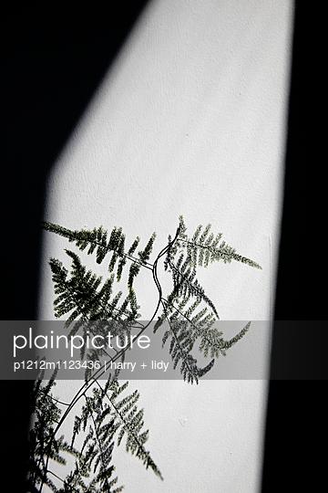 Asparagus Schatten - p1212m1123436 von harry + lidy