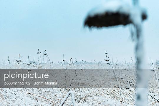 Verdorrte Sonnenblumen im Schneegestöber - p533m1152702 von Böhm Monika