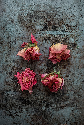 Four rose heads on a rusty surface - p1228m1109072 by Benjamin Harte