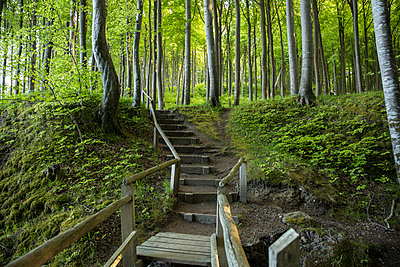 Germany, Mecklenburg-Western Pomerania, Ruegen, Jasmund National Park, Beech forest, forest path, steps - p300m2059225 von Maria Maar