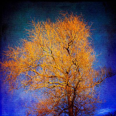 Tree - p8130355 by B.Jaubert