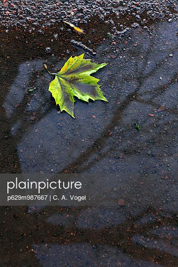 Herbststimmung - p629m987667 von C. A. Vogel