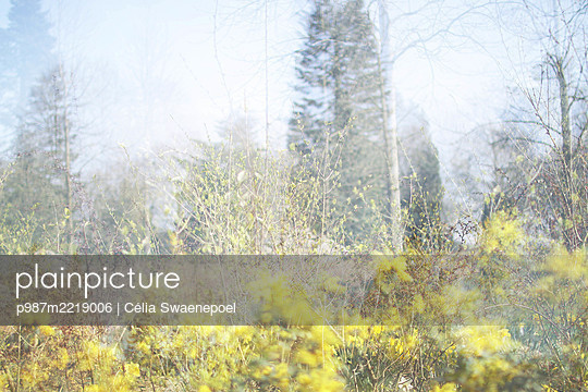 Le printemps 01 - p987m2219006 by Célia Swaenepoel