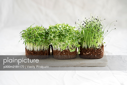 Studio shot of fresh arugula and onionmicrogreens - p300m2181170 by Vasily Pindyurin