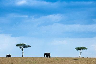 Masai Mara Nationalpark - p5330345 by Böhm Monika