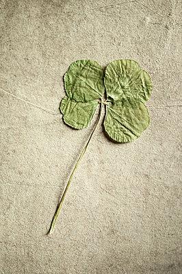 Dried clover - p971m1171750 by Reilika Landen
