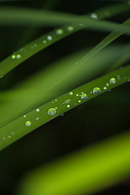 Water drops on a leaf - p971m698786 by Reilika Landen