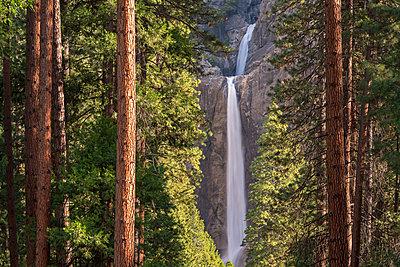 Lower Yosemite Falls through the conifer trees of Yosemite Valley, UNESCO World Heritage Site, California, United States of America, North America - p871m1082178 by Adam Burton